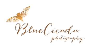 Logo BlueCicada Photography