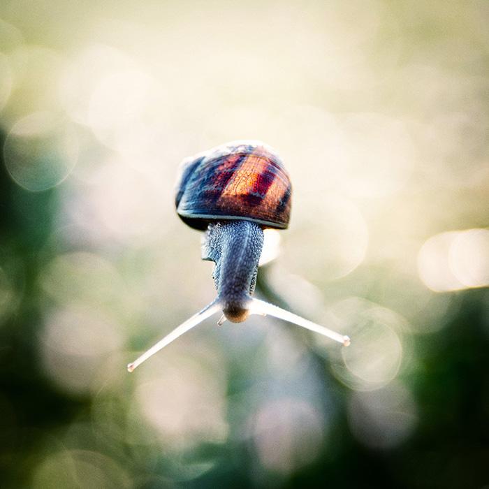 portrait-escargot