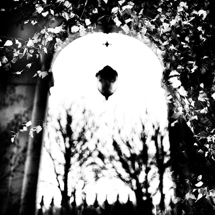 les feuilles des arbres de palais royal