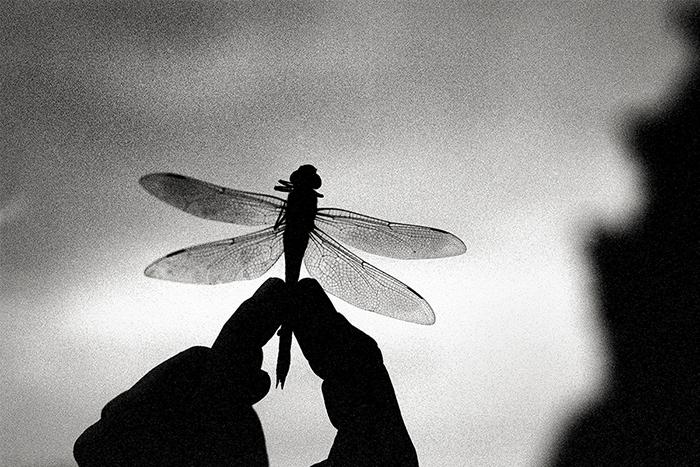 Photo de libellule en noir et blanc