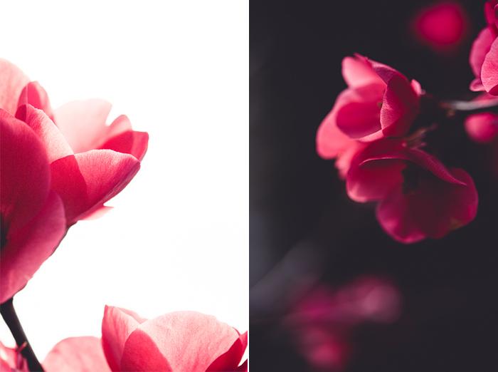 Photographie marco de fleurs