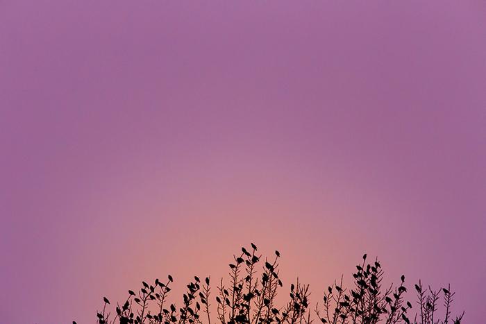 Paysages, des oiseaux, un arbre en ombre chinoise, et un coucher de soleil rosé, magnifique.